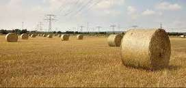 Dried Rolled Hay