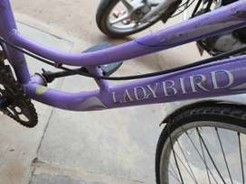 Lady bird BSA