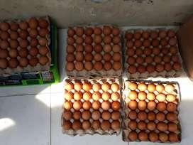Telur Ayam MURAH Per kG