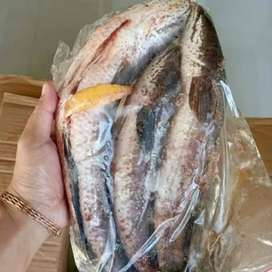 Ikan gabus bersih dan fillet kemasan 1 kg