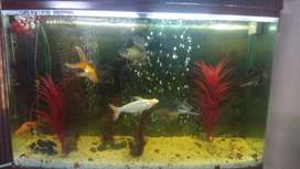47 inch Aquarium Only At Rs 5000