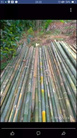 Bambu tali ukuran 5 meter