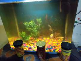 Fishtank brand new