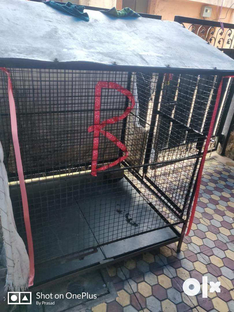 Cage available 0