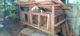 WOODEN HEN CAGE WITH ROOF