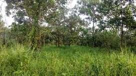 Dijual murah tanah 1 hektare