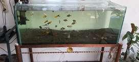 Aquarium 1 meter dan rak