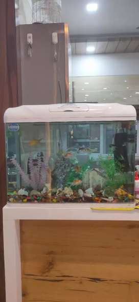 Medium size Aquarium with all machines installed ready to use.