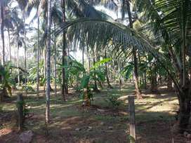 OPPOSITE TO PONNUKARa POST OFFICE 49 CENTS PLOT FOR SALE IN THRISSUR