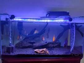 Aquarium ikan discus