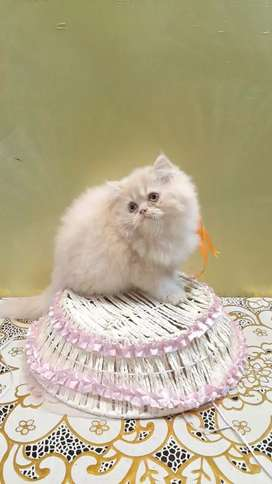 All types of cats and kittens are available