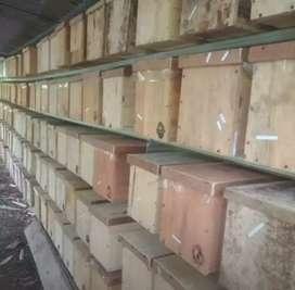 Koloni Lanceng Koloni Lebah Klanceng Lanceng Siap Panen Ternak Lanceng