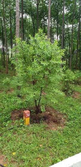 Sreegandham plantation in gokavaram