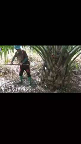 Perkebunan sawit
