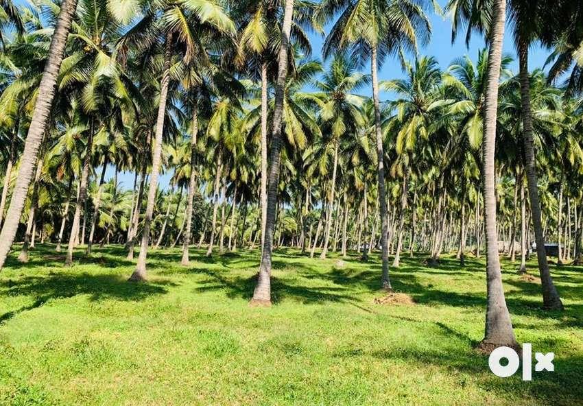 Thrichure palakkad border 10acre coconut farm cent 30000only 0