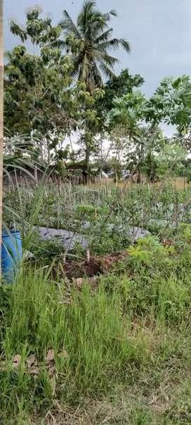 Tanah shmp murah view sawah view Merapi