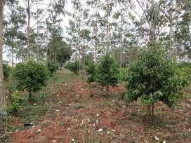#@~Safe investment farm plots near Ramoji Film City#@~