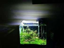 Planted aquarium full set up nano tank