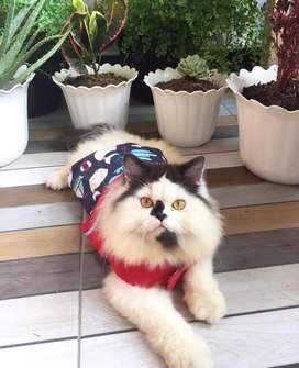 open adopt kucing perisa jantan