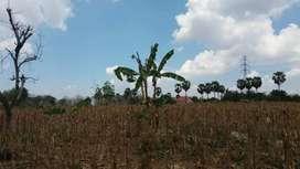 Dijual Tanah Di Desa Bektiharjo, Kec. Semanding, Kec Tuban