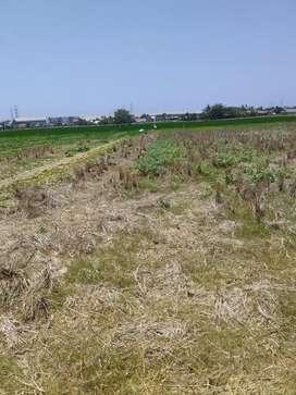 Tanah sawah cocok untuk investasi jangka panjang samping pertamina