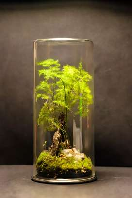 Miniature forest and desert terrariums (real plants)