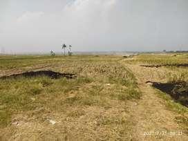 Tanah sawah teluk Jambe barat
