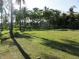 Tanah kebun di Sekotong