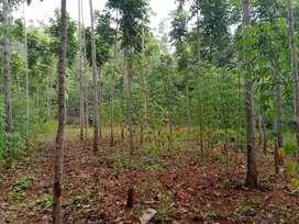 Tanah kebun Jati dengan kondisi tanah Datar