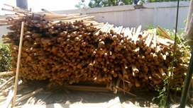 Ampulur sisa pabrik triplek kayu sengon