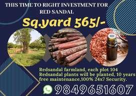 BEST INVEST FOR RED SANDAL FARM LANDS