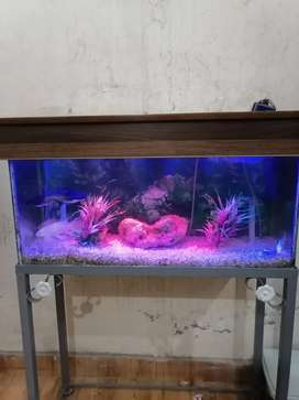 Fish Aqurium for sale