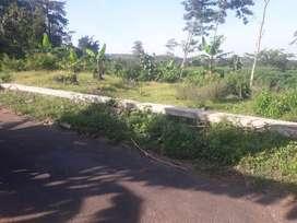 Dijual Cepat Tanah Di Desa Dukuh Waringin Kecamatan Dawe Kab. Kudus