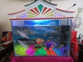1.5 feet Aquarium with all accessories and 12 fishes