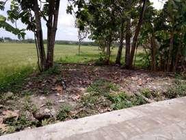 Tanah Murah cck rumah tinggal/Investasi/Kost di Bantul