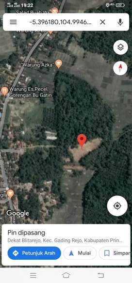 Tanah 3500m di blitarejo Gadingrejo