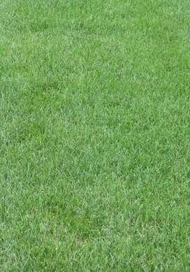 Suply Aneka Macam rumput Taman