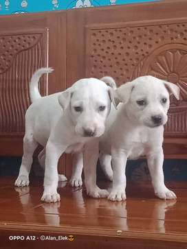 Jual berbagai jenis puppy