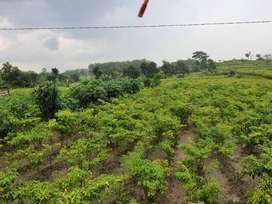 Tanah Plot Industri di Ploso Jombang