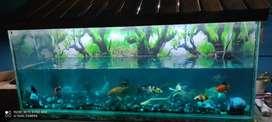 Huge Big Aquarium