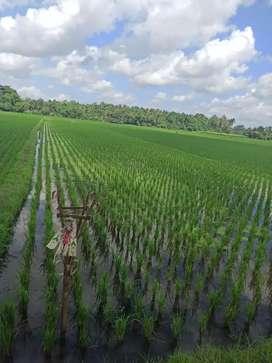 Tanah sawah produktif
