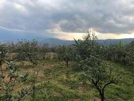 Dijual tanah kebun aktif view pegunungan