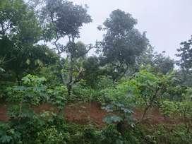 Rumah Tanah pekarangan jati
