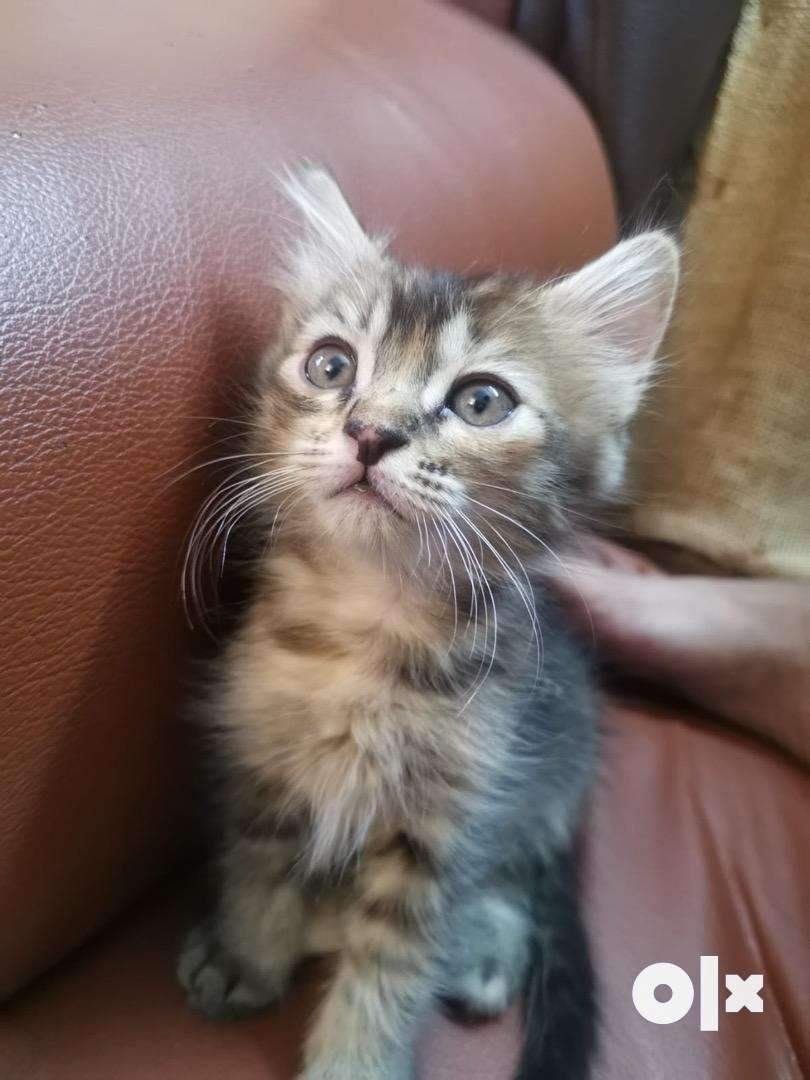 Kittens available 0