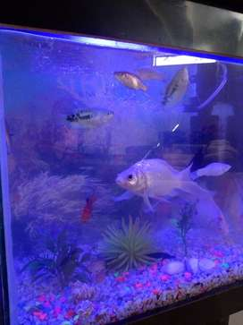 Cichlids, ghost fish, gourami, Thai koi and more for sale.