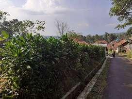 Dijual Murah Tanah Kebun Teh 1061 m2 di Cipancar Serangpanjang Subang