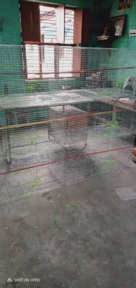 Bird cages , door delivery available