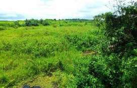 Jual tanah cepat dan murah dataran rendah