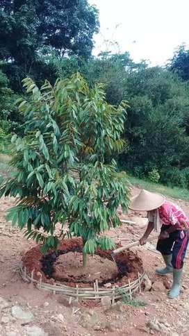 Dijual Tanah Kavling Kebun Durian Bukit Barisan Bogor