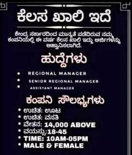 IT management Pvt ltd
